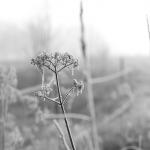 Herbstliche Landschaft umhüllt von Raureif und Nebel